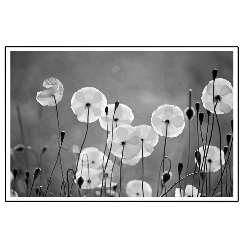 Üveges nyomtatott festmény, fekete-fehér, DX TYP 19 FLOWERS